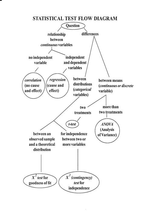 Guidelines Statistics School Of Integrative Biology